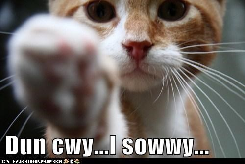 lolcat apology