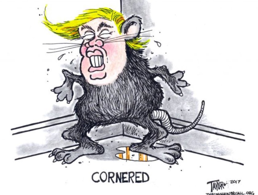 cornered Trump