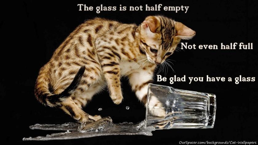 optimist cat