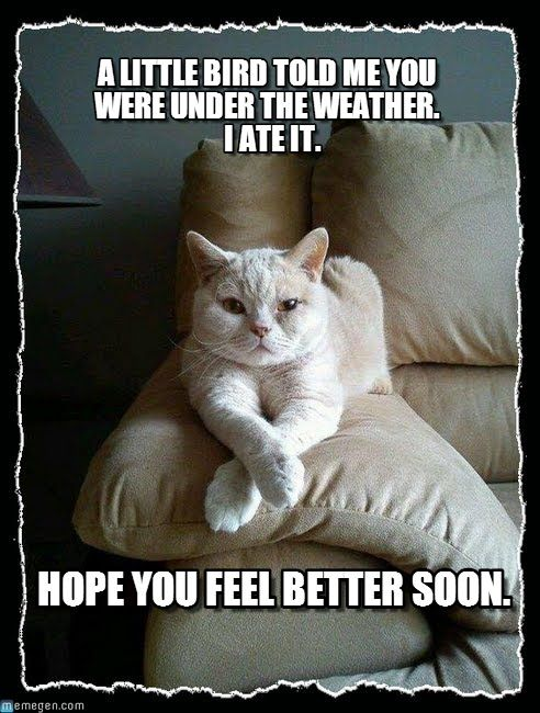 lolcat get well